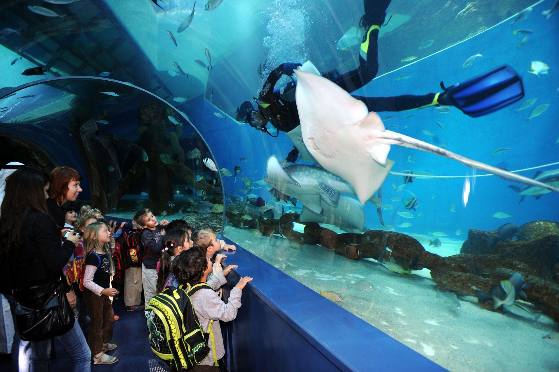 Sharjah Aquarium - Sharjah Museums Authority